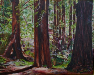 Summer Redwoods